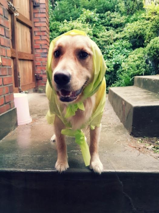 Sarang_rain